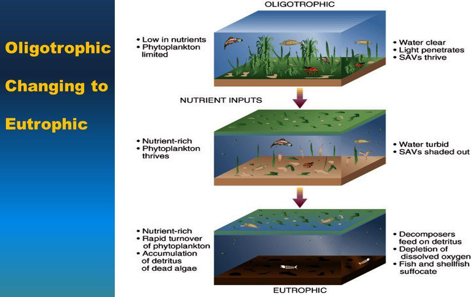 Oligotrophic Changing to Eutrophic