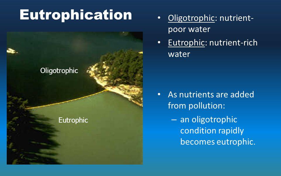 Eutrophication Oligotrophic: nutrient- poor water Eutrophic: nutrient-rich water As nutrients are added from pollution: – an oligotrophic condition ra