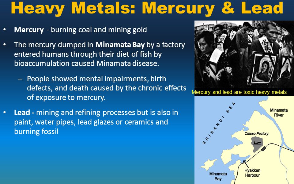 Mercury and lead are toxic heavy metals Mercury - burning coal and mining gold The mercury dumped in Minamata Bay by a factory entered humans through