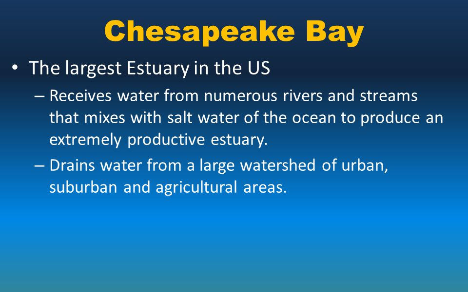 Chesapeake Bay The largest Estuary in the US – Receives water from numerous rivers and streams that mixes with salt water of the ocean to produce an e