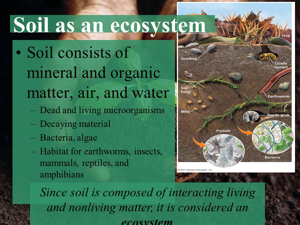 Soil as an ecosystem Soil consists of mineral and organic matter, air, and water –Dead and living microorganisms –Decaying material –Bacteria, algae –