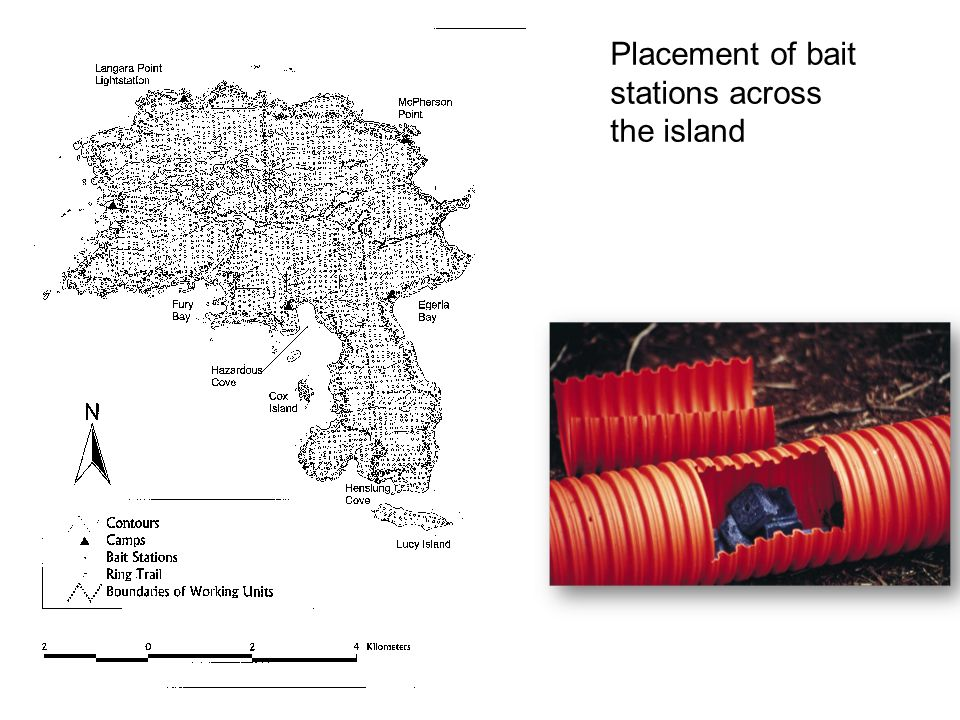 Placement of bait stations across the island