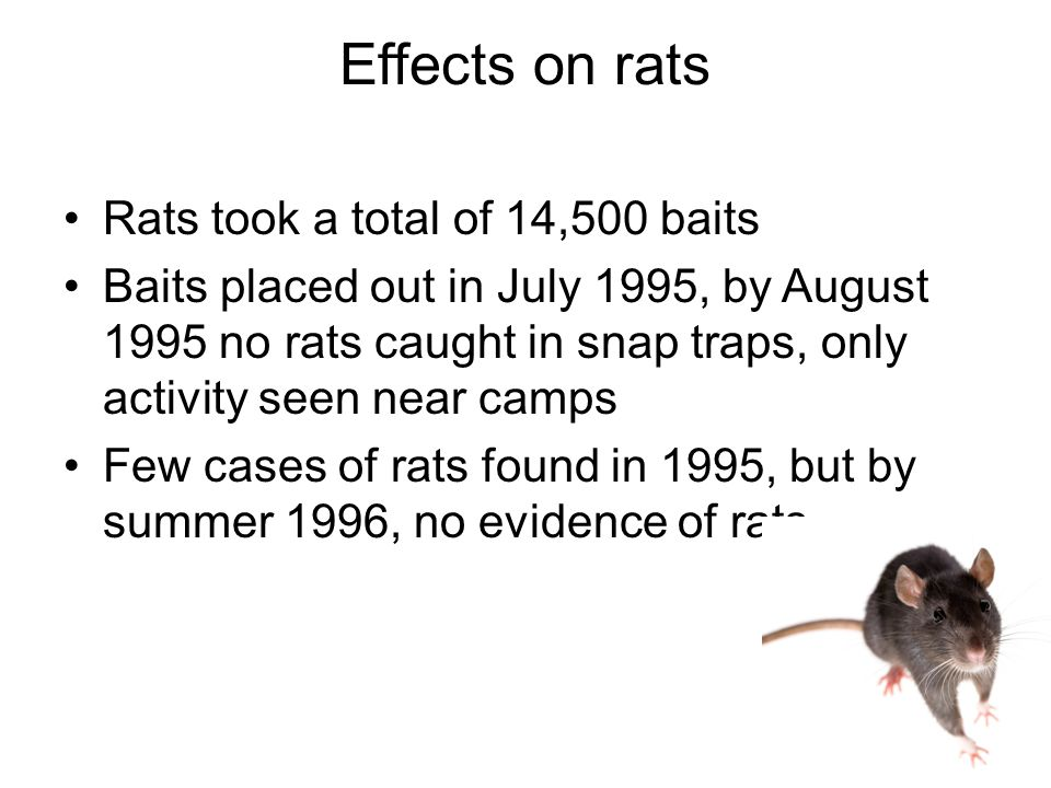 Effects on rats Rats took a total of 14,500 baits Baits placed out in July 1995, by August 1995 no rats caught in snap traps, only activity seen near camps Few cases of rats found in 1995, but by summer 1996, no evidence of rats.