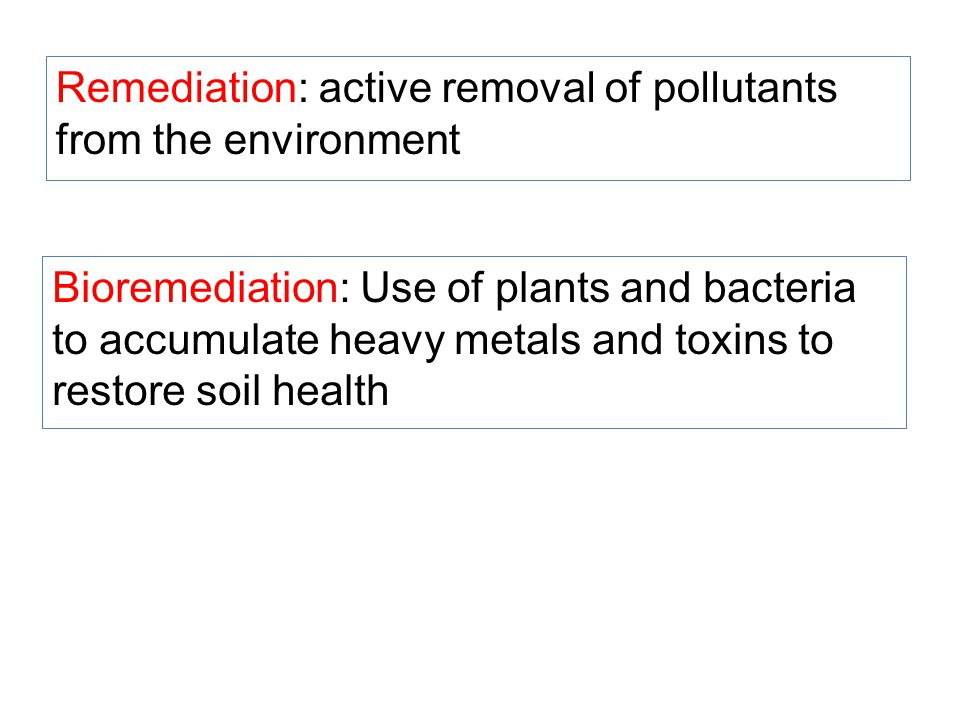 Remediation: active removal of pollutants from the environment Bioremediation: Use of plants and bacteria to accumulate heavy metals and toxins to restore soil health