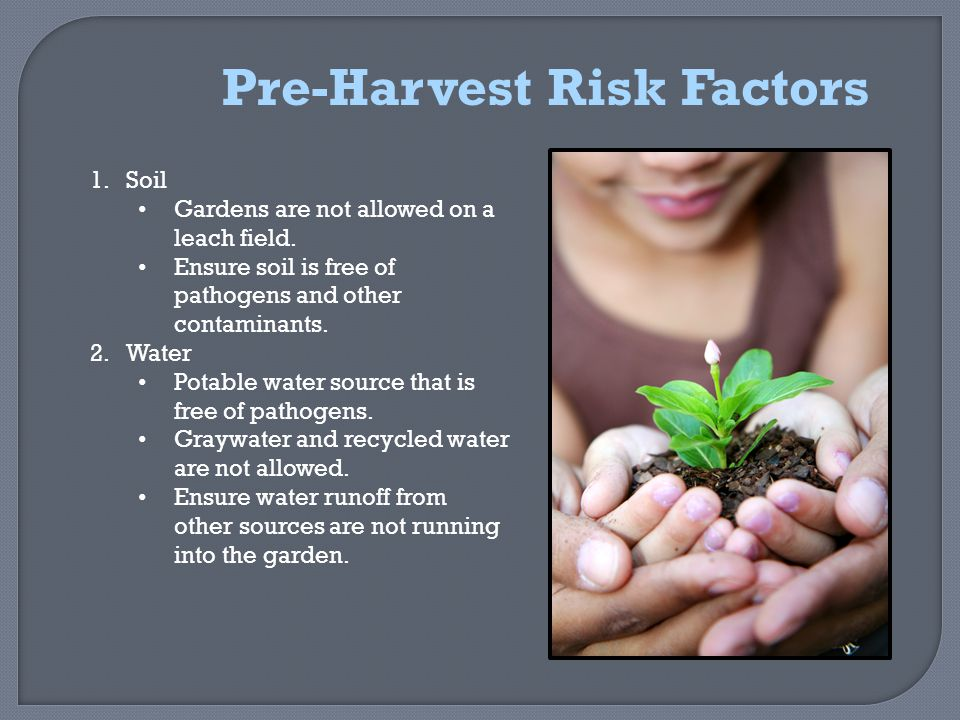 Pre-Harvest Risk Factors 1.Soil Gardens are not allowed on a leach field.