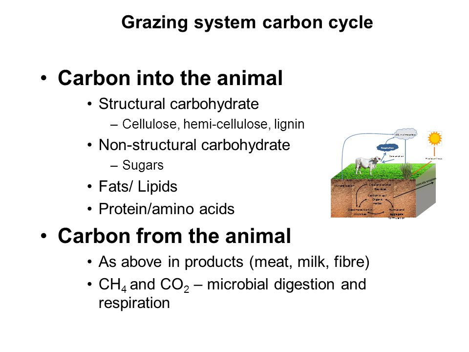 Carbon into the animal Structural carbohydrate –Cellulose, hemi-cellulose, lignin Non-structural carbohydrate –Sugars Fats/ Lipids Protein/amino acids Carbon from the animal As above in products (meat, milk, fibre) CH 4 and CO 2 – microbial digestion and respiration