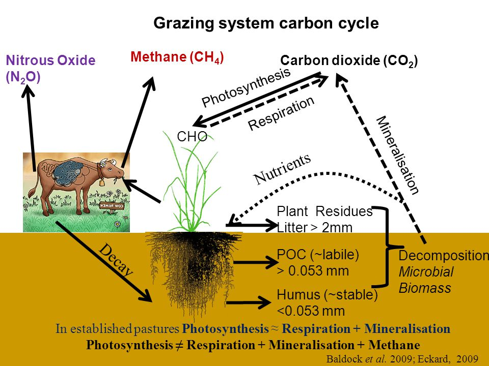 Grazing system carbon cycle Humus (~stable) <0.053 mm Respiration Photosynthesis CHO Plant Residues Litter > 2mm POC (~labile) > 0.053 mm Carbon dioxide (CO 2 ) Decomposition Microbial Biomass Mineralisation Methane (CH 4 ) Nitrous Oxide (N 2 O) Baldock et al.