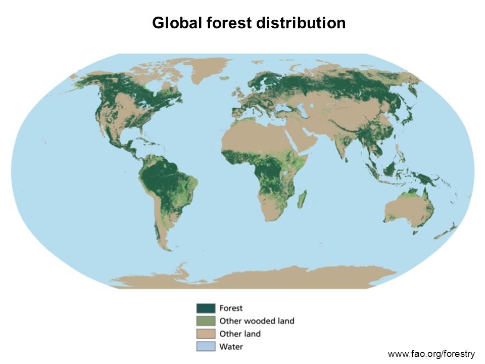 Global forest distribution www.fao.org/forestry