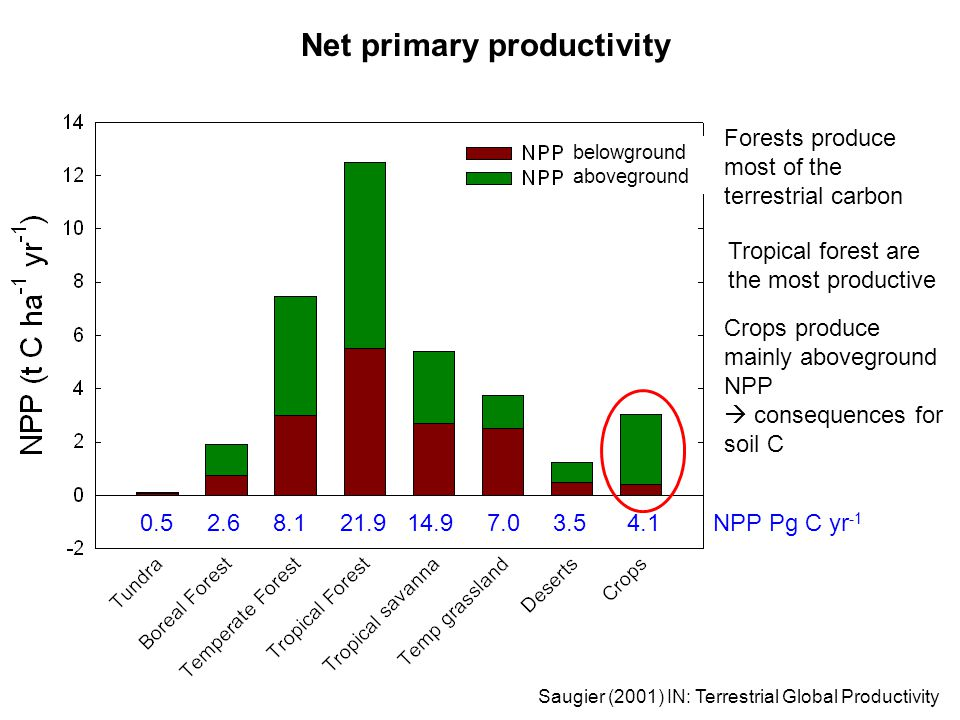Net primary productivity Tropical forest are the most productive Forests produce most of the terrestrial carbon Saugier (2001) IN: Terrestrial Global Productivity 0.5 2.6 8.1 21.9 14.9 7.0 3.5 4.1 NPP Pg C yr -1 Crops produce mainly aboveground NPP  consequences for soil C belowground aboveground
