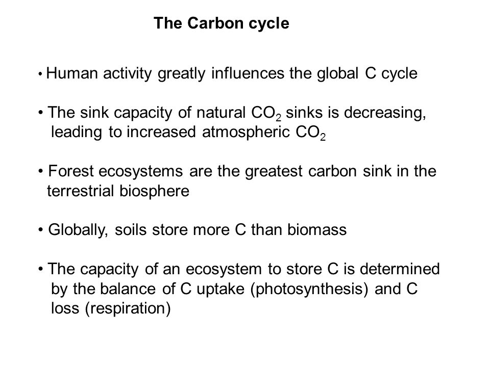 The Carbon cycle Human activity greatly influences the global C cycle The sink capacity of natural CO 2 sinks is decreasing, leading to increased atmospheric CO 2 Forest ecosystems are the greatest carbon sink in the terrestrial biosphere Globally, soils store more C than biomass The capacity of an ecosystem to store C is determined by the balance of C uptake (photosynthesis) and C loss (respiration)