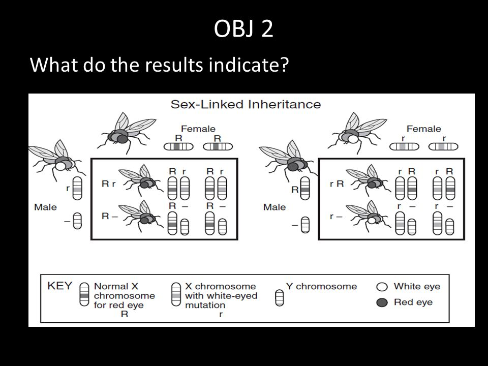 OBJ 2 What do the results indicate?