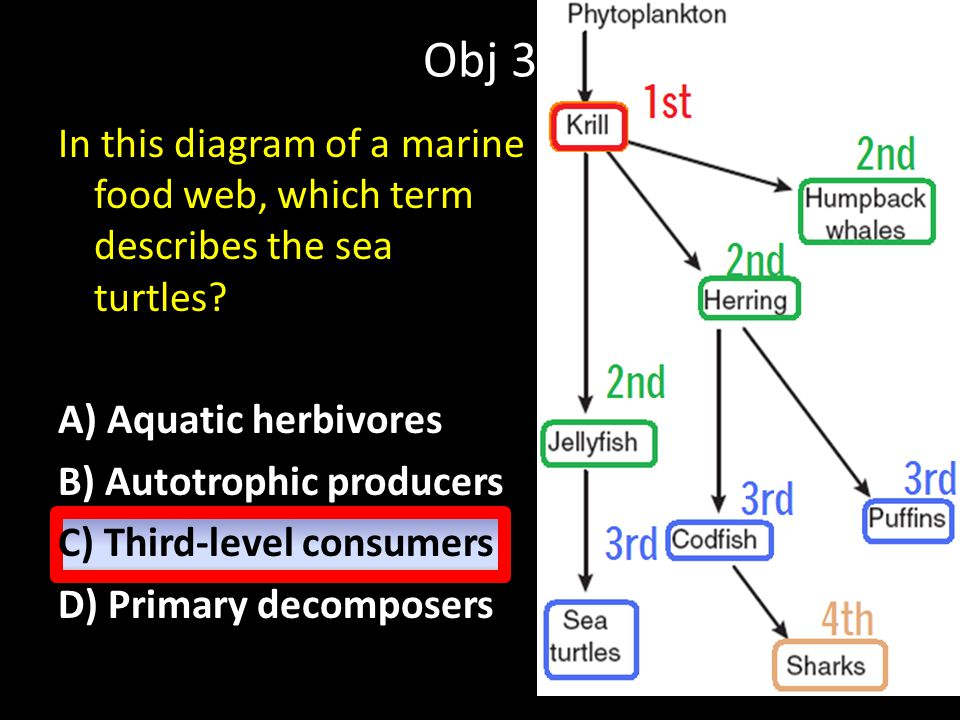 Obj 3 In this diagram of a marine food web, which term describes the sea turtles.