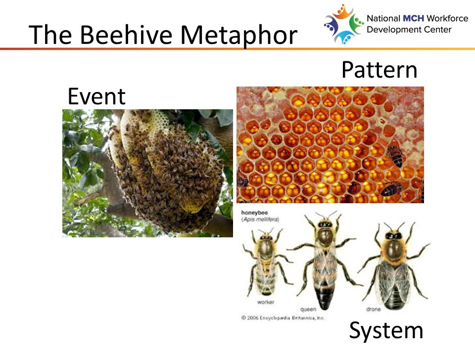 The Beehive Metaphor What could an individual do differently.
