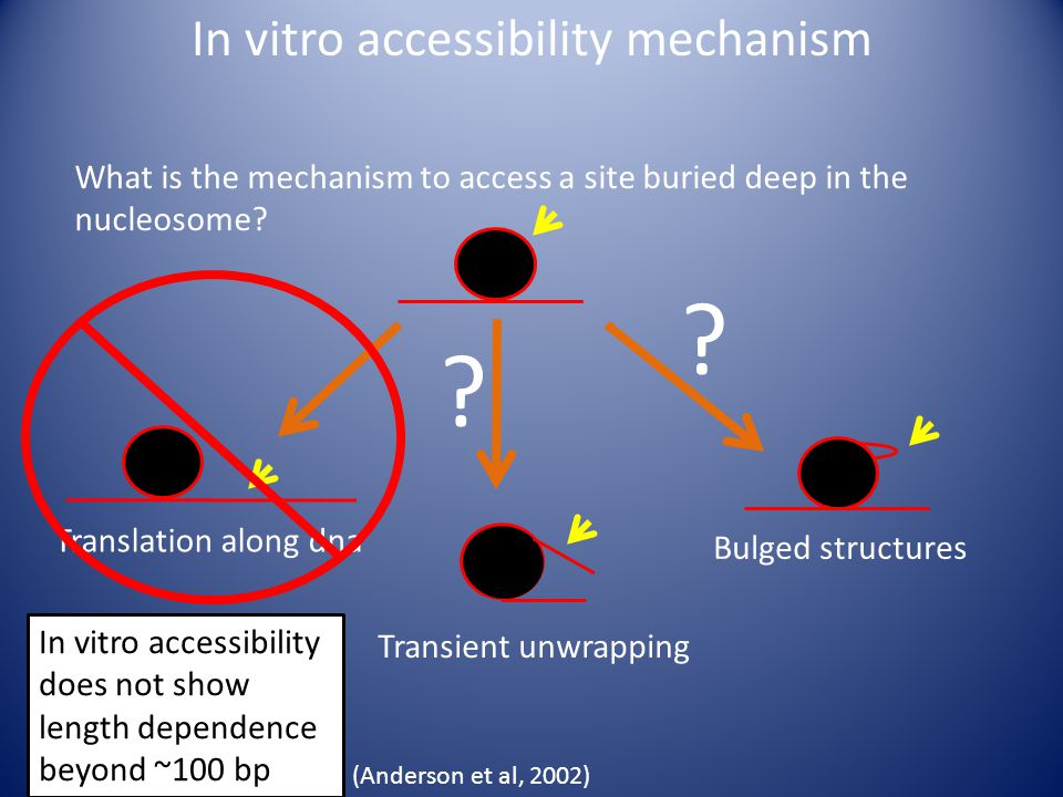 In vitro accessibility mechanism What is the mechanism to access a site buried deep in the nucleosome.