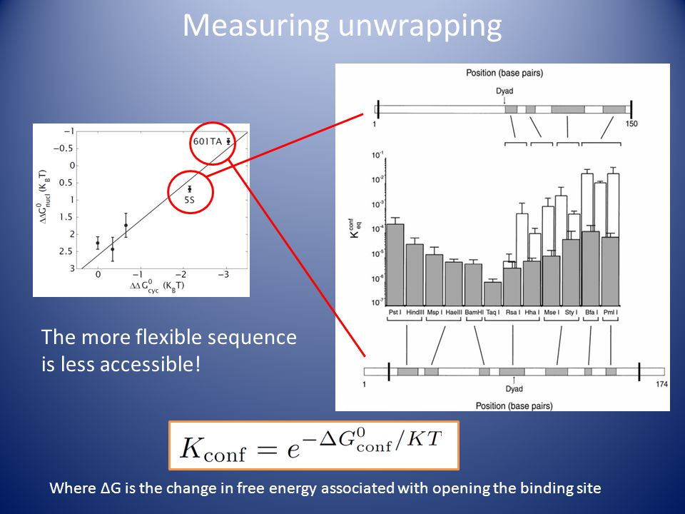 Measuring unwrapping The more flexible sequence is less accessible.