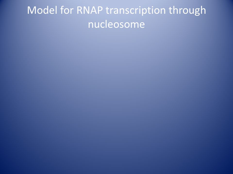 Model for RNAP transcription through nucleosome