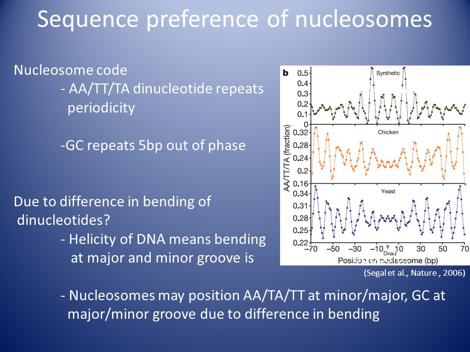 Sequence preference of nucleosomes Nucleosome code - AA/TT/TA dinucleotide repeats appear with 10bp periodicity -GC repeats 5bp out of phase Due to difference in bending of dinucleotides.