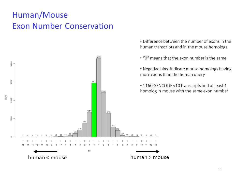 "11 Difference between the number of exons in the human transcripts and in the mouse homologs ""0"" means that the exon number is the same Negative bins"