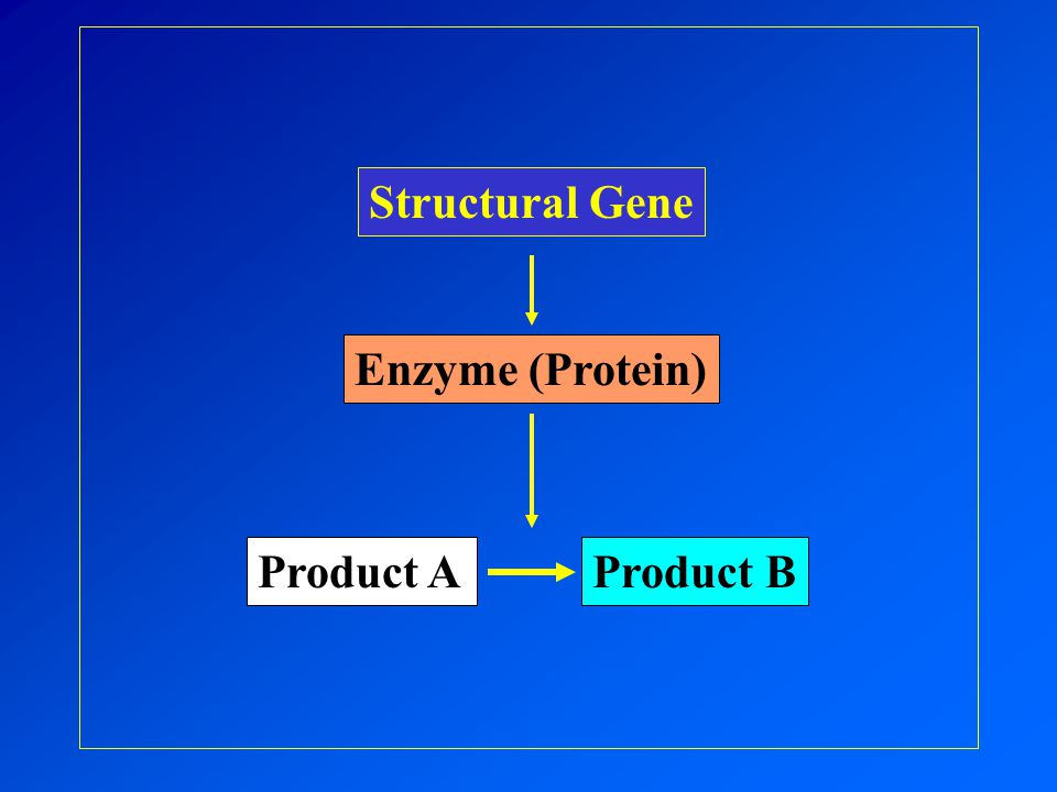 Product AProduct B Structural Gene Enzyme (Protein)