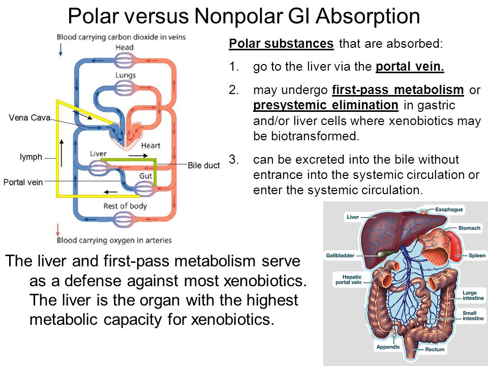 Polar versus Nonpolar GI Absorption Polar substances that are absorbed: 1.go to the liver via the portal vein. 2.may undergo first-pass metabolism or