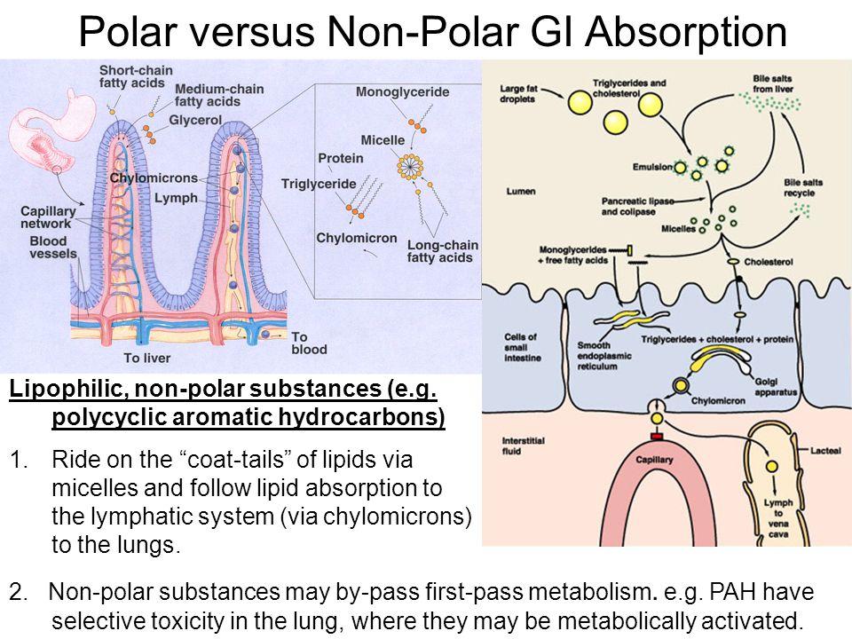 "Polar versus Non-Polar GI Absorption Lipophilic, non-polar substances (e.g. polycyclic aromatic hydrocarbons) 1.Ride on the ""coat-tails"" of lipids via"