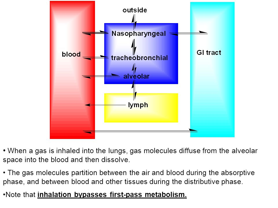 When a gas is inhaled into the lungs, gas molecules diffuse from the alveolar space into the blood and then dissolve. The gas molecules partition betw