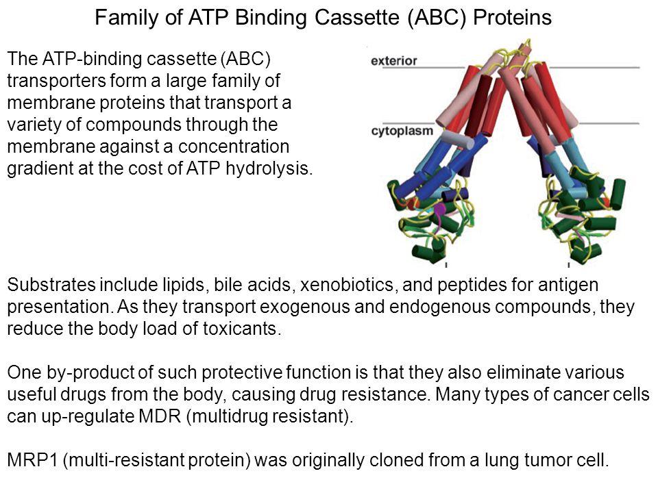 Family of ATP Binding Cassette (ABC) Proteins The ATP-binding cassette (ABC) transporters form a large family of membrane proteins that transport a va