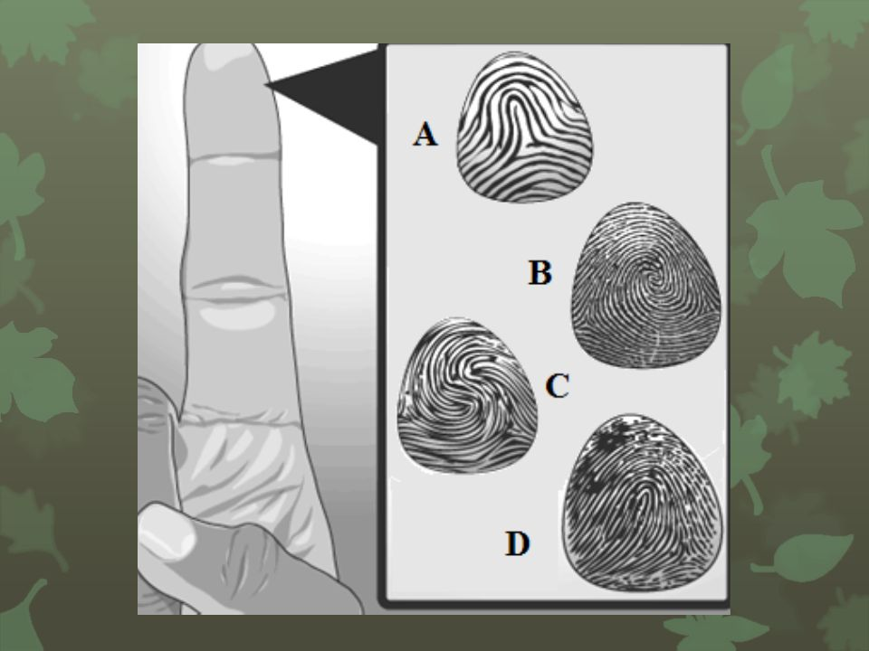 What is the name of the fingerprint classification system that is used to classify prints according to how many whorls a person has?