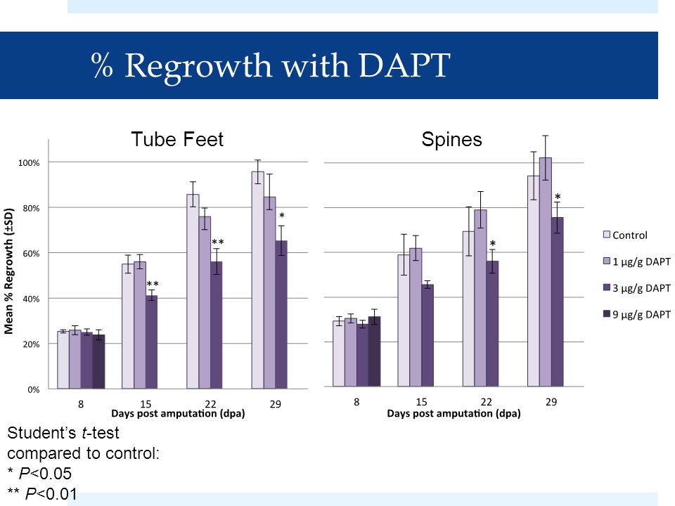 % Regrowth with DAPT Tube FeetSpines Student's t-test compared to control: * P<0.05 ** P<0.01