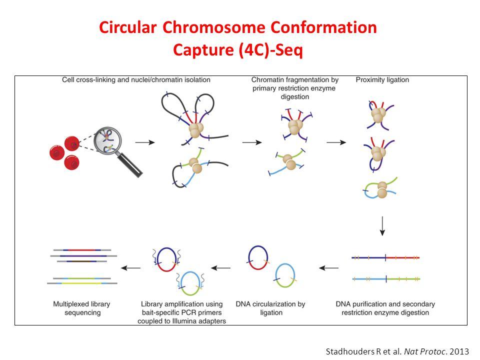 Circular Chromosome Conformation Capture (4C)-Seq Stadhouders R et al. Nat Protoc. 2013