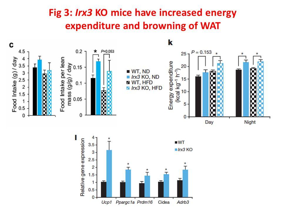 Fig 3: Irx3 KO mice have increased energy expenditure and browning of WAT
