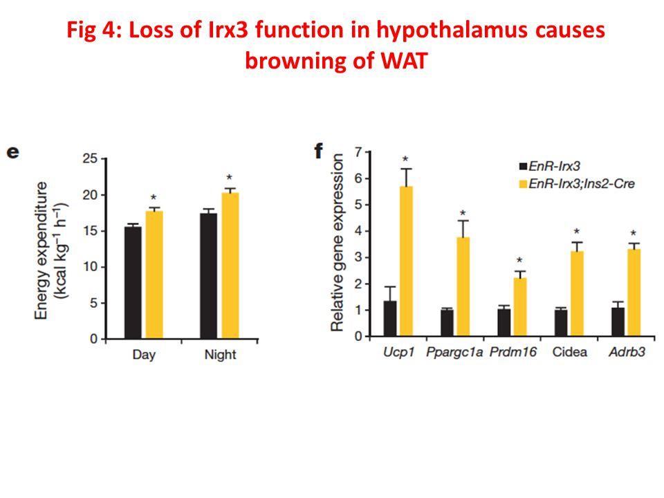 Fig 4: Loss of Irx3 function in hypothalamus causes browning of WAT