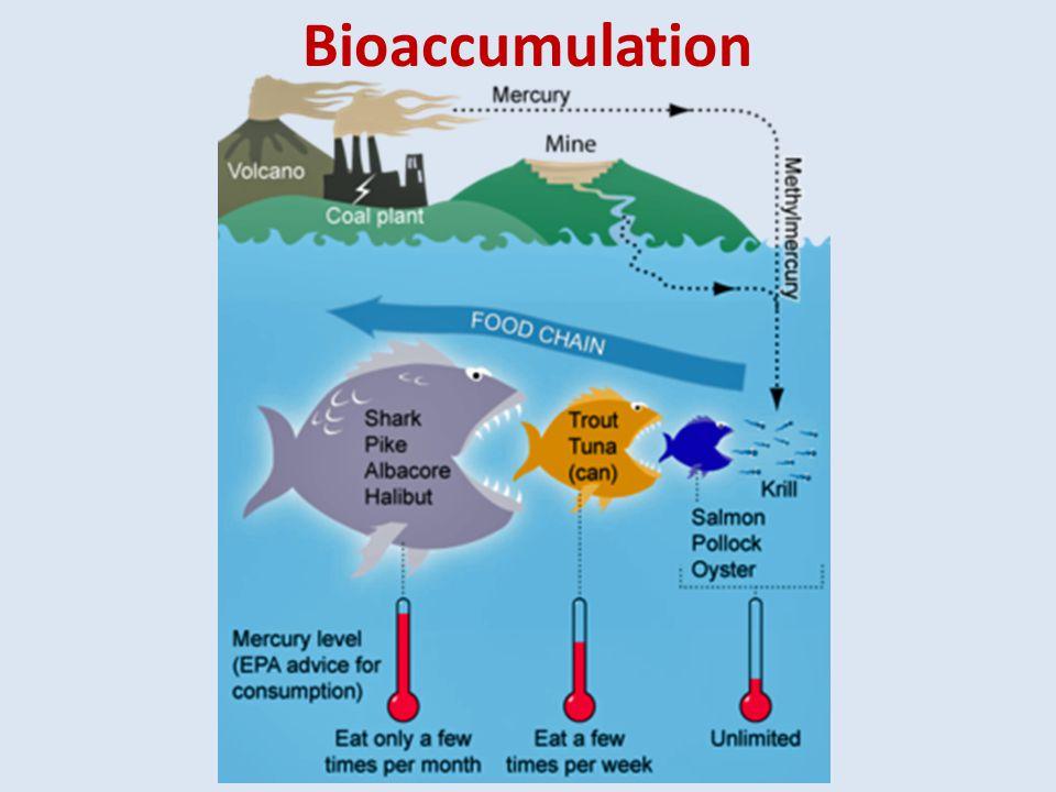Bioaccumulation