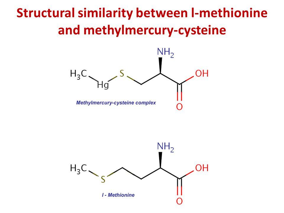 Structural similarity between l-methionine and methylmercury-cysteine