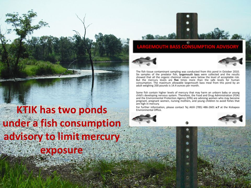 KTIK has two ponds under a fish consumption advisory to limit mercury exposure
