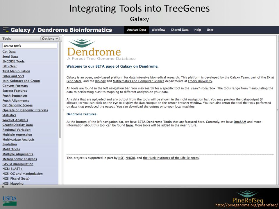 http://pinegenome.org/pinerefseq/ Analysis Resources Custom Databases