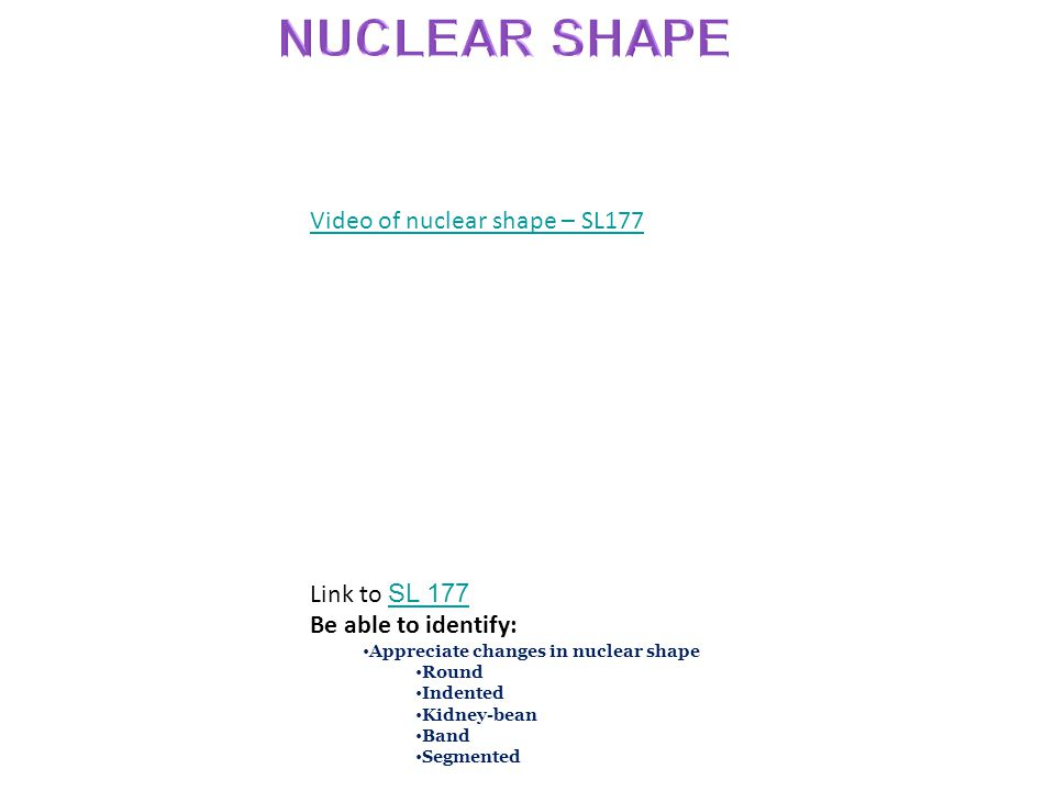 Video of nuclear shape – SL177 Link to SL 177 SL 177 Be able to identify: Appreciate changes in nuclear shape Round Indented Kidney-bean Band Segmented