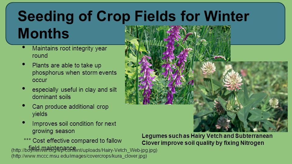 Seeding of Crop Fields for Winter Months Maintains root integrity year round Plants are able to take up phosphorus when storm events occur especially
