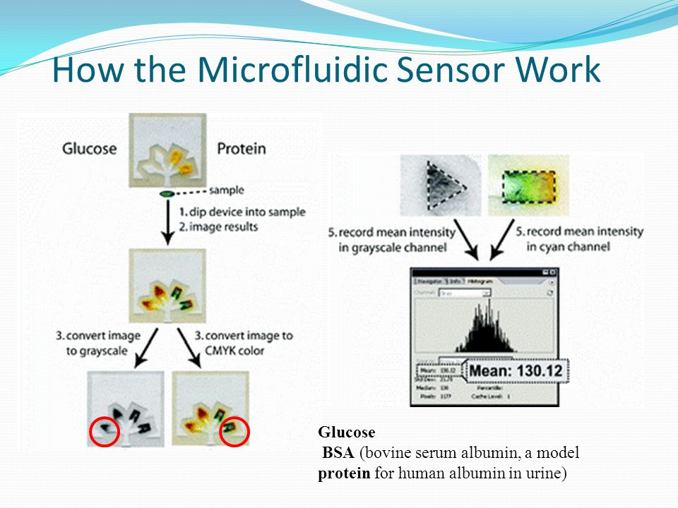 How the Microfluidic Sensor Work Glucose BSA (bovine serum albumin, a model protein for human albumin in urine)