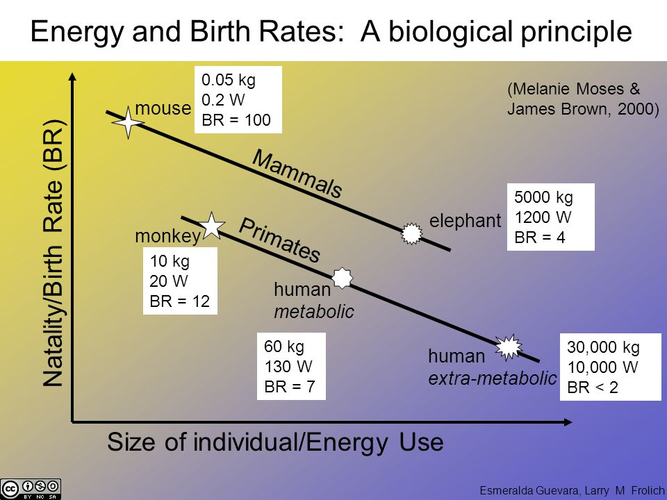 Esmeralda Guevara, Larry M Frolich Energy and Birth Rates: A biological principle (Melanie Moses & James Brown, 2000) Natality/Birth Rate (BR) Primates Size of individual/Energy Use monkey human metabolic human extra-metabolic 60 kg 130 W BR = 7 30,000 kg 10,000 W BR < 2 10 kg 20 W BR = 12 Mammals mouse elephant 0.05 kg 0.2 W BR = 100 5000 kg 1200 W BR = 4