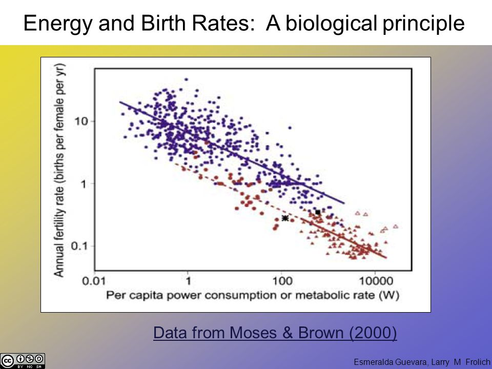 Esmeralda Guevara, Larry M Frolich Data from Moses & Brown (2000) Energy and Birth Rates: A biological principle