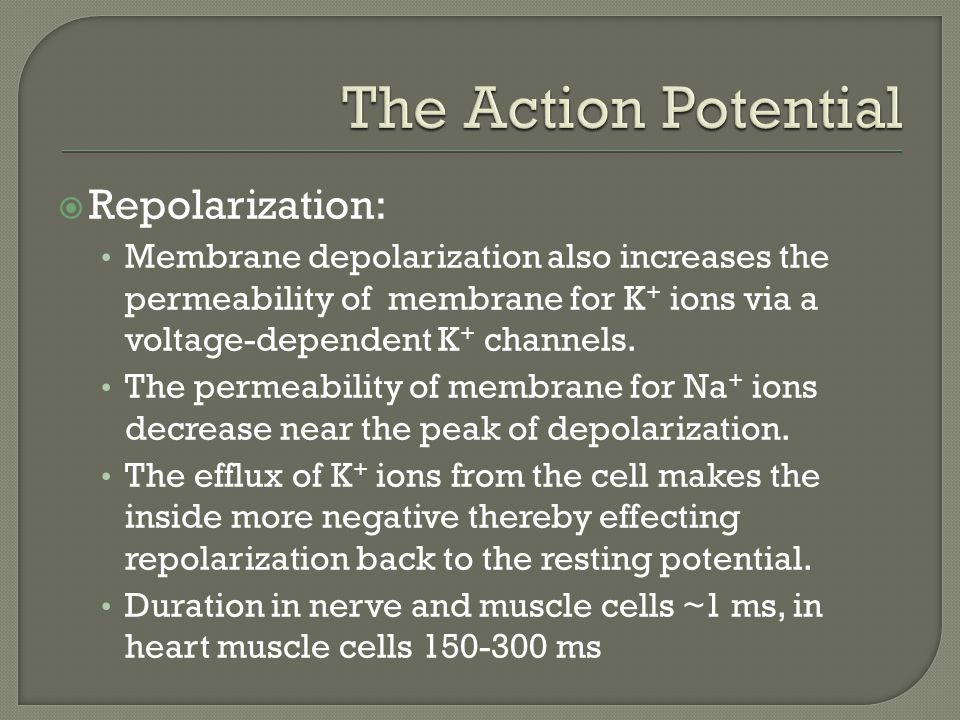  Repolarization: Membrane depolarization also increases the permeability of membrane for K + ions via a voltage-dependent K + channels.