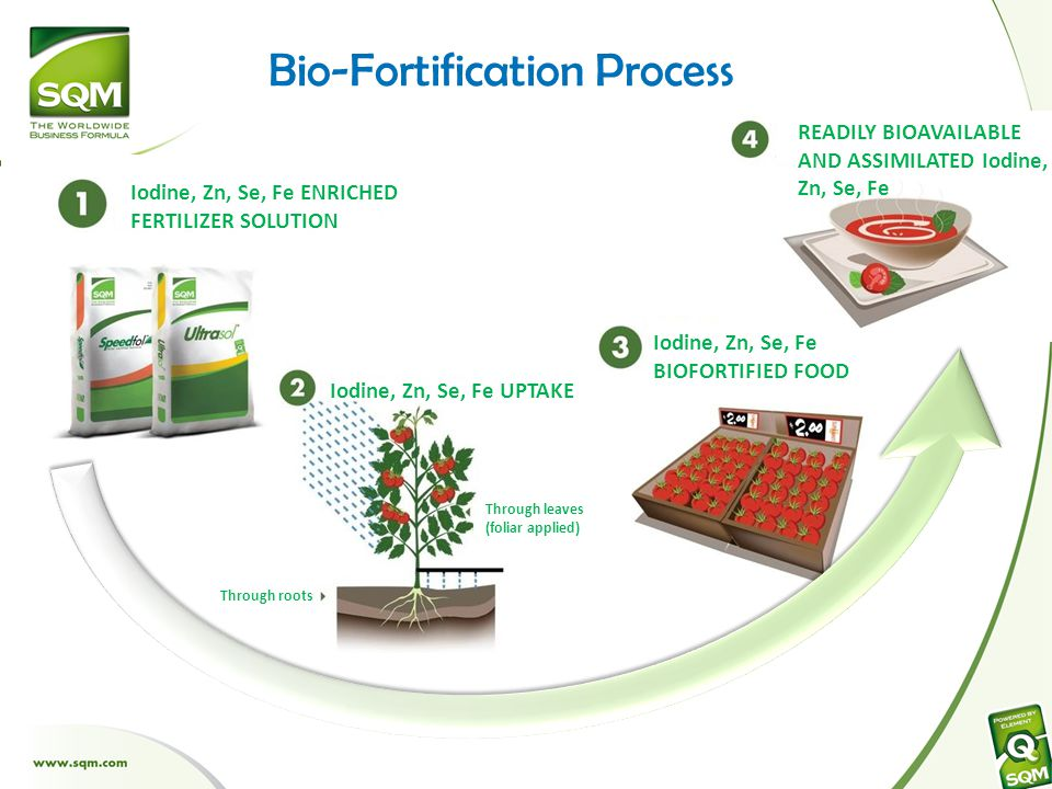 Bio-Fortification Process Iodine, Zn, Se, Fe ENRICHED FERTILIZER SOLUTION Iodine, Zn, Se, Fe UPTAKE Iodine, Zn, Se, Fe BIOFORTIFIED FOOD READILY BIOAVAILABLE AND ASSIMILATED Iodine, Zn, Se, Fe Through leaves (foliar applied) Through roots