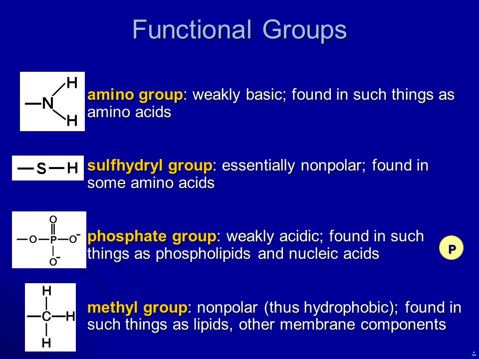 . Functional Groups amino group: weakly basic; found in such things as amino acids amino group: weakly basic; found in such things as amino acids sulf