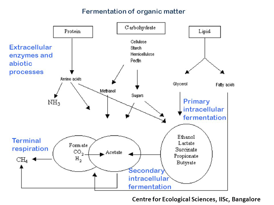 Centre for Ecological Sciences, IISc, Bangalore Extracellular enzymes and abiotic processes Primary intracellular fermentation Fermentation of organic matter Secondary intracellular fermentation Terminal respiration