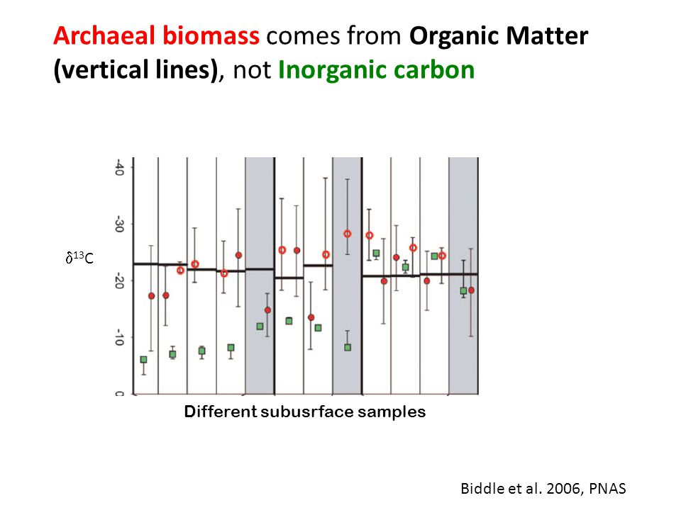 Biddle et al. 2006, PNAS Archaeal biomass comes from Organic Matter (vertical lines), not Inorganic carbon  13 C Different subusrface samples