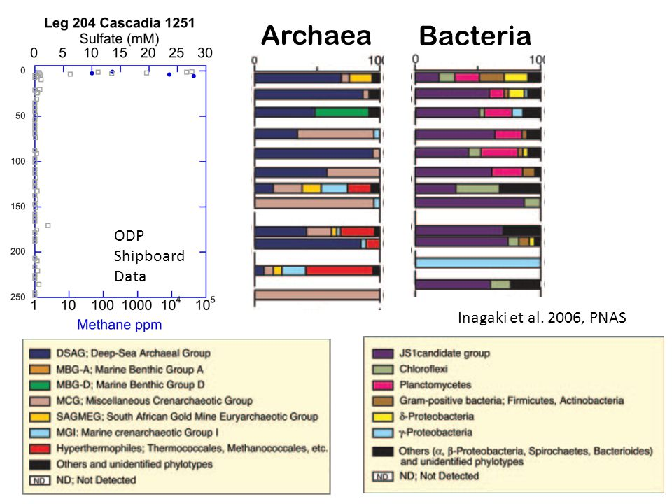 Inagaki et al. 2006, PNAS Archaea Bacteria ODP Shipboard Data