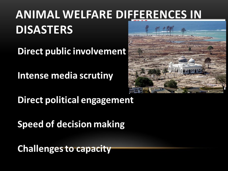 ANIMAL WELFARE DIFFERENCES IN DISASTERS Direct public involvement Intense media scrutiny Direct political engagement Speed of decision making Challenges to capacity
