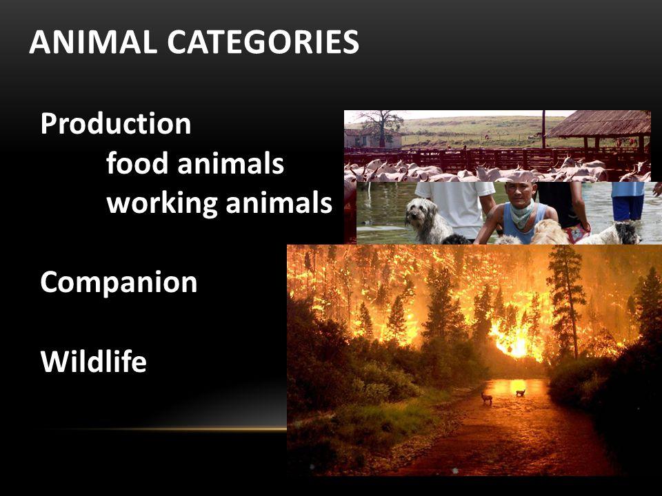 ANIMAL CATEGORIES Production food animals working animals Companion Wildlife