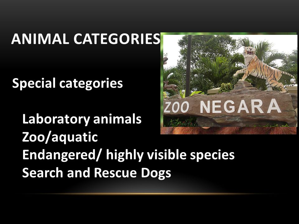 ANIMAL CATEGORIES Special categories Laboratory animals Zoo/aquatic Endangered/ highly visible species Search and Rescue Dogs